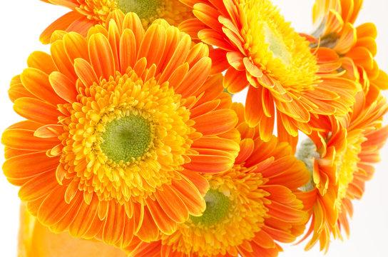 オレンジ色のガーベラの花束