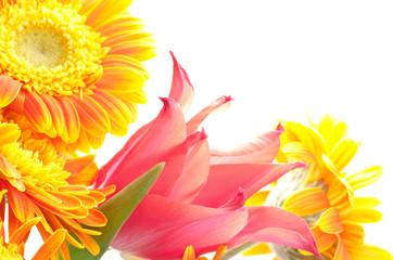 チューリップとガーベラの花束