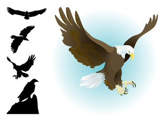collection of eagles landing,flying, sitting