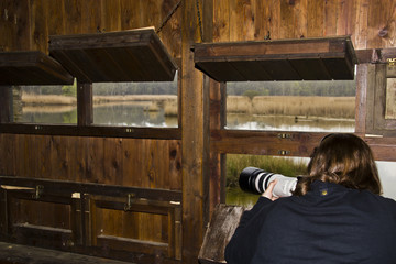 Fotografa di uccelli nella palude