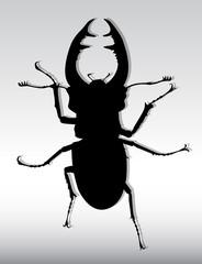 bug deer