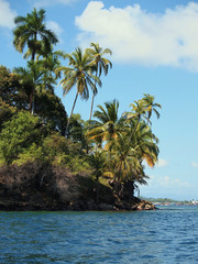 Tropical island with beautiful palm trees, isla Solarte, Bocas del Toro, Panama