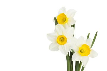 Photo sur Aluminium Narcisse narcissus flowers