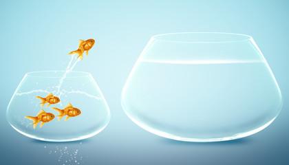 goldfish  jumping to Big bowl