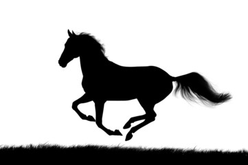 horse silhouette on white