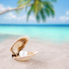 Shell with pearl on a beach