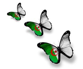 Three Algerian flag butterflies, isolated on white