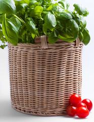 Obraz Pomidory koktajlowe z bazylią w koszu wiklinowym na białym tle. - fototapety do salonu