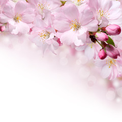 Spring flowers design border background