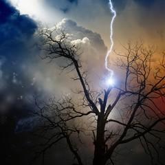 Fototapete - Tree struck by lightning