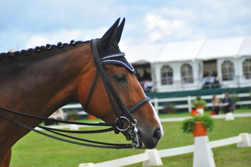 Dressur-Pferd | Grand Prix