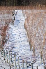 Sentiero Vigna con Neve