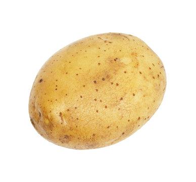 One potato isolated, object on white background