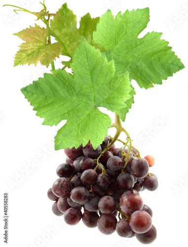 grappe de raisin avec feuilles de vigne photo libre de droits sur la banque d 39 images fotolia. Black Bedroom Furniture Sets. Home Design Ideas