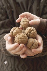 Girl holding several walnuts