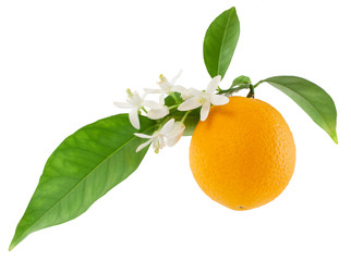 Wall Mural - Orange on a branch with leaves and a flowers