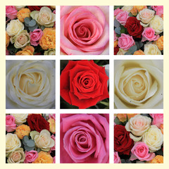 mixed rose collage
