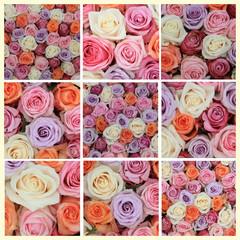Pastel rose collage