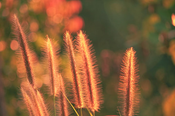 Flower grass and bokeh