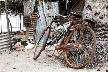 Old, vintage bicycle leaning on palm tree