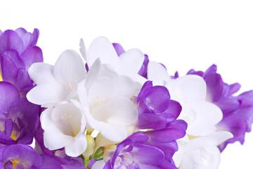 Fresh fresia flowers