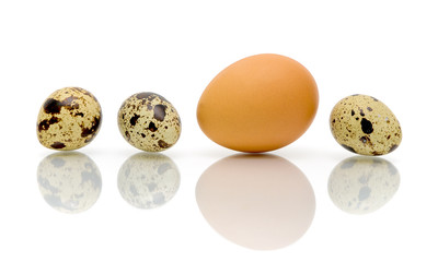 eggs of different types of close-up