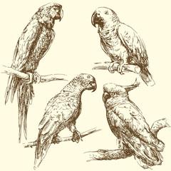 Wall Murals Owls cartoon parrots