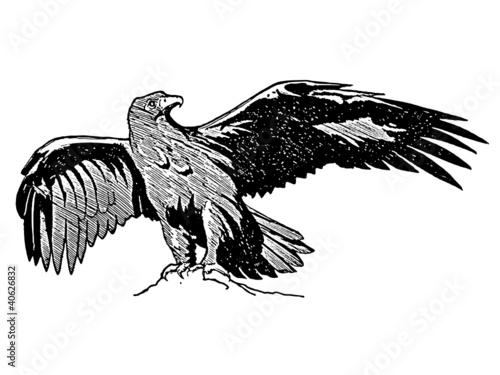 Aigle royal fichier vectoriel libre de droits sur la banque d 39 images image 40626832 - Dessin d aigle royal ...