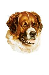 dog illustration in white background