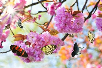 Kirschblütenfest der Schmetterlinge