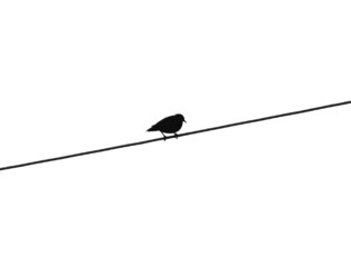 Bird on electric wire - grayscale, isolated on white