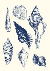 7 various seashells