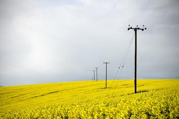 telegraph poles in farmland field