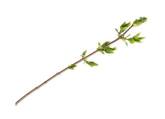 Branch of tree Fototapete