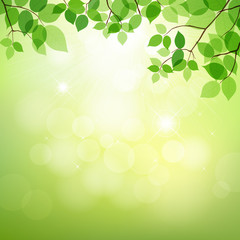 Green leaves background natural, vector