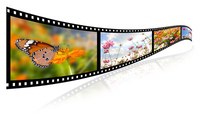 35mm 3d show images of flowers, butterfly video formats.