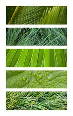 Wall Mural - Fond, texture, bannière, bandeau, design, plante, vert, herbe