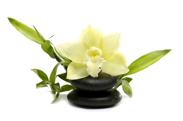 Spa still life with white orchid flowers
