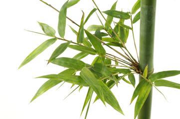 Green Fresh bamboo shoots stems