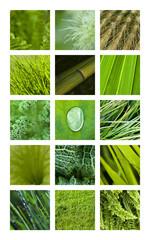 Wall Mural - Texture, matière, fond, vert, nature, jardin, végétal