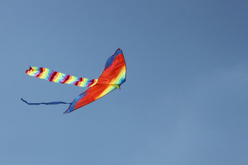 Kite in the sky (freedom)