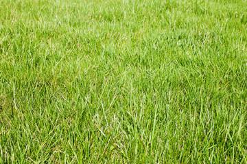 fresh-spring-green-grass