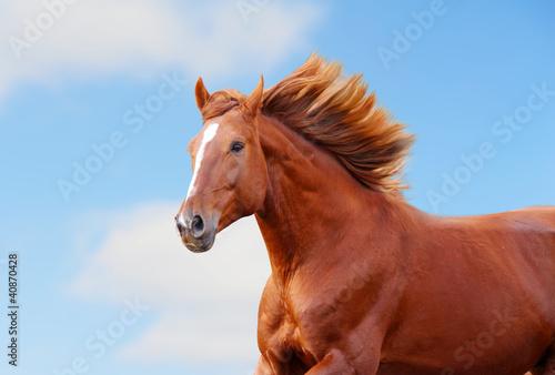 лошадь с гривой  № 3127231 загрузить