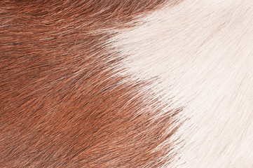 Buffalo skin background