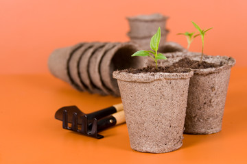 Peat pots, seedlings and garden tools