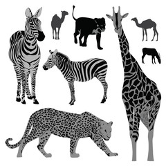 Vector illustration set: wild animals .Africa
