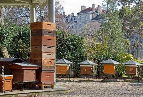 Ruches En Ville Paris France Photo Libre De Droits Sur