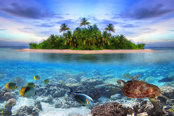 Photo on textile frame Island Marine life at tropical island of Maldives