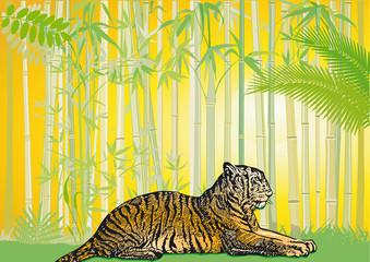 Tiger im asiatischem urwald