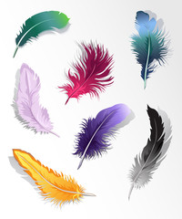 Set of 7 colorful feathers.